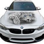 Леопард белый