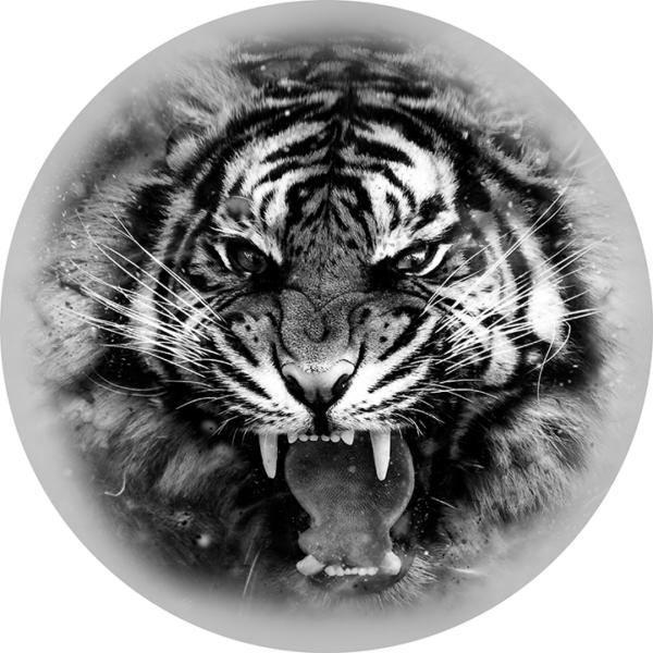 nakleika-na-zapasku-tigr-chb
