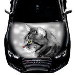 Кот черно белый